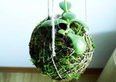 kokedama - drzewko szczęścia