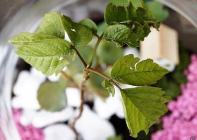 ogródki i lasy w szkle caramel