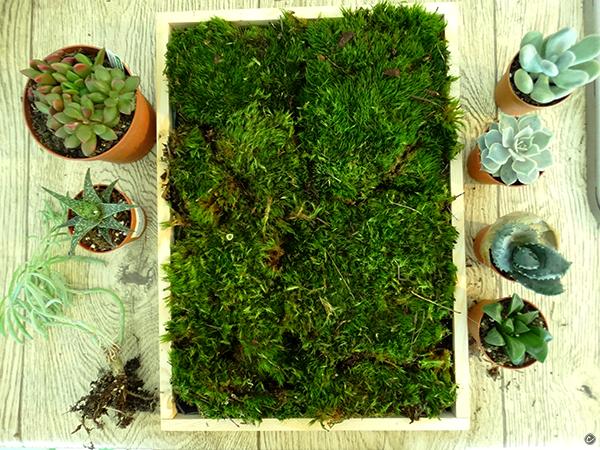 ogródek wertykalny