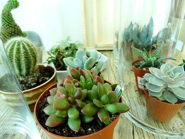 rośliny do aranżacji