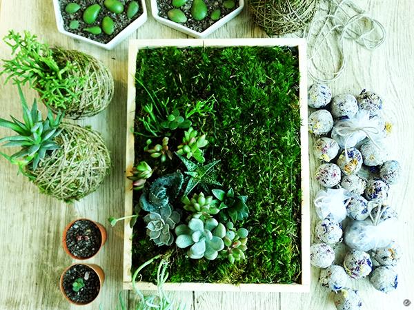 ogródek wertykalny i rośliny