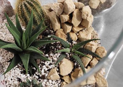 terrarium cacti z kaktusami i sukulentami warsztaty caramel