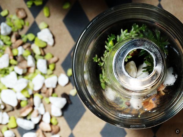 ogródki w żarówkach caramel warsztaty online