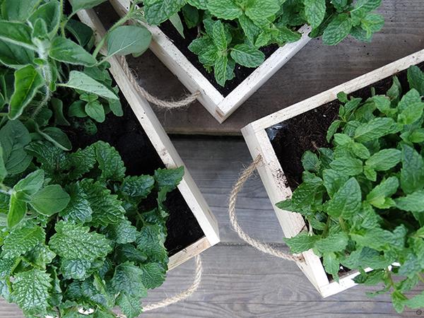 ogródki ziołowe caramel warsztaty online