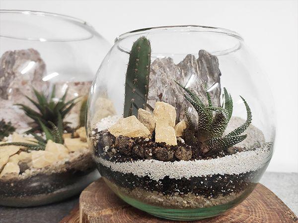 terrarium cacti caramel warsztaty online