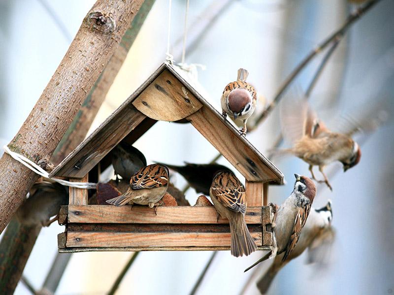 karmniki dla ptaków caramel